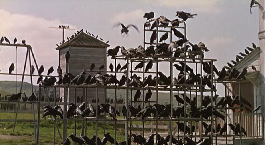 پلانی از فیلم «پرندگان»