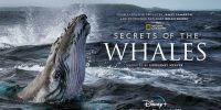 مستند Secrets of the Whales